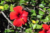 Spanish Flowers in the Parcs — Stock Photo