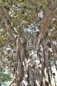 деревья в парк — Стоковое фото