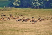 Resting deers in the countryside — ストック写真