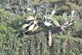 Beautiful Cactus in the Garden — Stock Photo