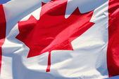 Canadian flag in the wind — Stock Photo
