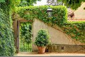 Grön trädgård — Stockfoto