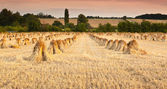 Wheat sheaves — Stock Photo