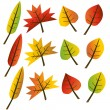Autumn leaves collection illustration — Stock Vector