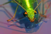 Golden eyes insect - beautifull close up macro on dvd disk — Stock Photo