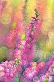 Amazing colorful heather with bokeh — Stock Photo