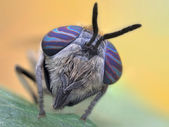 Small colorful horsefly on a leaf — Stock Photo