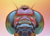 Close up macro of dragonfly — Stock Photo