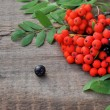 Stock Photo: Two Rowan