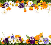 Frame of flowers — Stock Photo