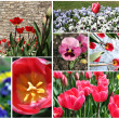 Stock Photo: Set of spring flowers