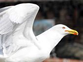 Seagull angel — Stockfoto