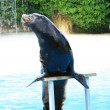 Stock Photo: Sea-lion