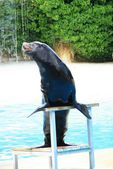 Sea-lion — Foto Stock