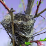 Spring time birds nest — Stock Photo #30636747