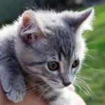 Bright eyed kitten — Stock Photo #30762493
