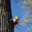Squirrel high in tree — Stock Photo