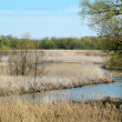 Wetlands in Michgian — Stock Photo
