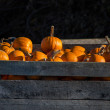 Large box of orange pumpkins — Stock Photo