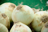 Pile of white onions — Stock Photo