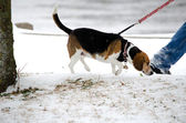 Walking dog in the winter — Stock Photo
