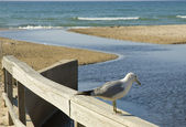 Seagull on a fence at the beach — Stock Photo