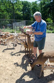 Man feeding deer — 图库照片