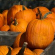 Piles of  pumpkins — Stock Photo