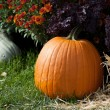 Pumpkins gourds and fall colors — Stock Photo