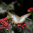 Flutterbys and flowers — Stock Photo #31725693