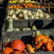 Wood bins of gourds and pumpkins — Foto de Stock