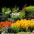 Colorful flower garden — Stock Photo