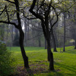Stock Photo: Misty morning in spring park