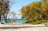 Golden trees on lake Michigan beach — Stock Photo