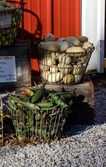 Wire Baskets of fall gourds — Stockfoto