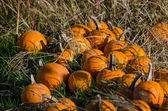 Pile of pumpkins — Stock Photo