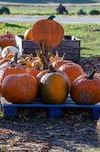 Orange pumpkins for sale — Stock Photo