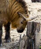 Biorący zwierząt czuły punkt — Zdjęcie stockowe