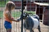 Kind- en geitenvlees — Stockfoto