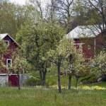 Spring time farm — Stock Photo #34700391