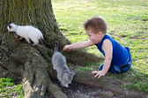 Boy and pet kittens — Stock Photo