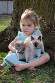 My kittens — Foto Stock