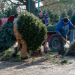 Watching workers at a tree farm — Stockfoto