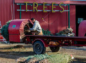 Wrapping trees at a rural tree farm — Stock Photo