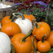 Fall mums with white and orange pumpkins — Stock Photo #38229579