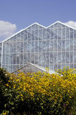 Greenhouse and yellow flowers — Stock Photo