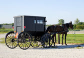 A waiting Amish buggy  and horse — Stock Photo