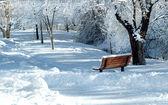 Invierno en el parque — Foto de Stock