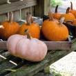 Fall pumpkins in boxes — Stock Photo
