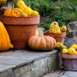 Decorative gourds in pots on stone stairs — Stock Photo